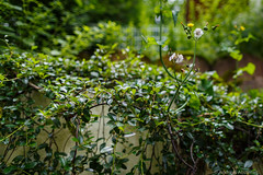 20160626-AA-0505 (andreas.abzieher) Tags: nature canon bokeh wideangle canon6d canonef24mmf14liiusm