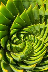 Aloe curl (gmacfly) Tags: plant abstract macro nature aloe creative sunny twist curl