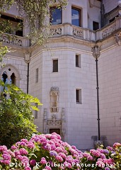 IK2A9765 copysmall (azphotomom37) Tags: hearstcastle sansimeon california hydrangea flowers beautiful kgibsonphotography canon2470mm tamron