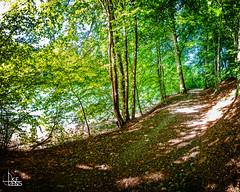 Shadow Path (Ukelens) Tags: longexposure sunset summer sun water schweiz switzerland stream wasser sonnenuntergang suisse swiss sommer bern svizzera fluss sonne wald sunbeam sonnenstrahl sonnenschein langzeitbelichtung sunstream wlder berncity ukelens