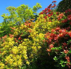 Colourful Bodnant! ('cosmicgirl1960' NEW CANON CAMERA) Tags: flowers blue sky green nature gardens wales nt cymru parks snowdonia bodnant eryri gardd yabbadabbadoo worldflowers