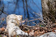 Nikon D500 - DSC_0273-05s (dojoklo) Tags: book nikon tricks example howto tips use sample setup guide manual setting learn tutorial d500 wildliferefuge nationalwildliferefuge quickstart fieldguide greatmeadows nikond500
