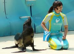 Lucia (EmilyOrca) Tags: show animal mammal aquarium marine stage seal greeting trainer