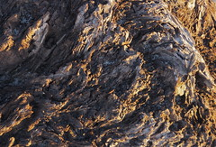 a craggy landscape - Natural patterns series (Steve Attwood) Tags: wood newzealand tree nature canon pattern gnarly weathered root greymouth naturalpattern