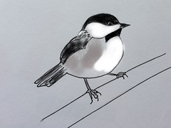 Black-capped Chickadee (*s@lly*) Tags: chickadee brushes