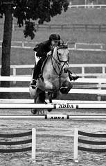rain jump (Jen MacNeill) Tags: horses blackandwhite bw horse white black rain jump pennsylvania monotone pa riding jumper horseshow raining showing rider equestrian quentin equine showjumping quentinridingclub jennifermacneilltraylor jmacneilltraylor jennifermacneill equinejumping1