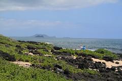 IMG_13722 (mudsharkalex) Tags: hawaii oahu makapuubeachpark makapuubeach