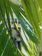 Bird (Connie Churcher) Tags: travel bird thailand temple bangkok buddha royal jade grandpalace temples emerald emeraldbuddha phraborommaharatchawang grandpalacetemples