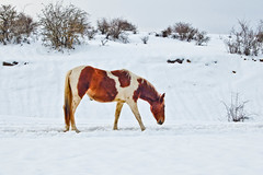 (MCULEBRASLEON) Tags: horse caballo nieve rememberthatmomentlevel4 rememberthatmomentlevel1 rememberthatmomentlevel2 rememberthatmomentlevel3 rememberthatmomentlevel5