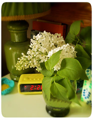 white lilacs bouquet (bewitchedmagic) Tags: tree petals spring vase azalea bouquet lilacs crabapple blooming