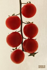 Tomatoes (Chaoqi Xu) Tags: italy roma canon photography eos photo italia colore foto tomatoes fotografia pomodori  xu         600d  2013   chaoqi