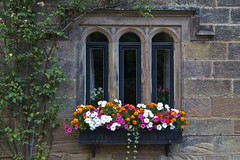 Window Boxes, Ripley (Peter Cook UK) Tags: flowers window ripley boxes
