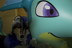 IMG_0752 (aaronwhipya) Tags: blue ice furry dragon aaron inflatable whale mirage lioness inflate inflation fursuit aaron8181 theicelioness