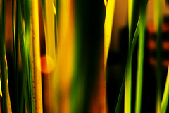 (Daniel Ivn) Tags: light orange naturaleza plant color macro verde green planta luz nature colores naranja danielivan danielivn