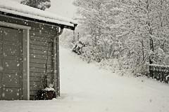 """""""No snowflake in an avalanche ever feels responsible."""" (stjernesol) Tags: white snowing inter whiter wintery allwhite surroundedbysnowfall itsowhitethatidonthaveaview justsnowflakesfallingfromthesky likewearewrappedinsideadreamorsomething notoftenwehaveheavysnowfalllikethisnotthistimeofyearanyway ohwellitisonlysnow iaminsideundertheblanket"""