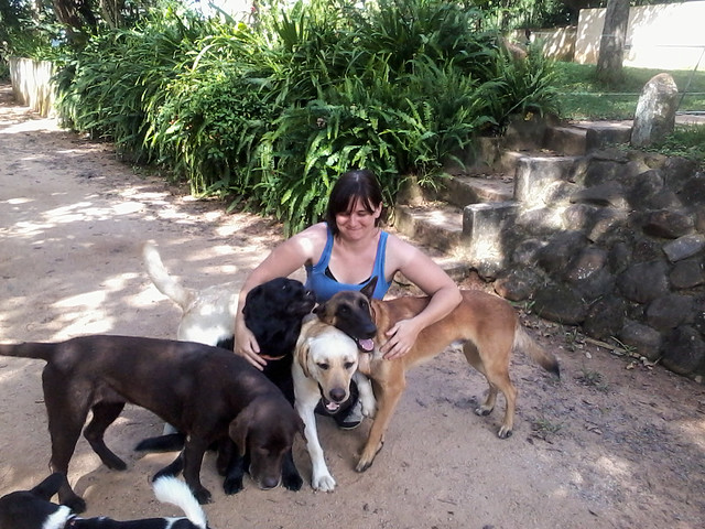 Too Many Dogs, Hazyview, South Africa.