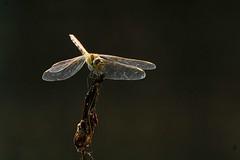 DSC_0077 libelle 3