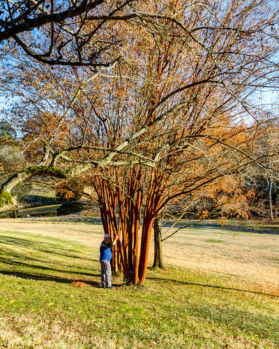 Cheekwood Botanical Garden & Museum of Art - Nov. 29, 2013
