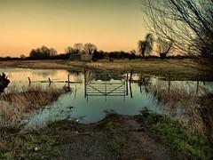 11th Feb 2014 Floods 3 (2) (saxonfenken) Tags: reflection water gate flood wash fens bigmomma gamewinner whittlesey 8121 challengeyou 15challengeswinner friendlychallenges herowinner storybookwinner 8121lake