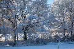 Tree Row (PatrickPotter) Tags: trees winter light snow nature canon landscape alabama patrick arab guntersville 1635mm northalabama uniongrove napg canonef1635mm guntersvillelake canon5dmarkii patrickpotter {vision}:{outdoor}=0955 {vision}:{snow}=0521 {vision}:{mountain}=061 {vision}:{sky}=0877