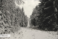 A Historical Walk (desomnis) Tags: wood trees winter blackandwhite bw snow nature monochrome austria blackwhite österreich woods path czechrepublic historical easteurope ironcurtain upperaustria mühlviertel forst böhmerwald bohemianforest westeurope desomnis