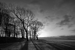 Chanctonbury Ring looking toward Cissbury Ring (Simon Verrall) Tags: blackandwhite westsussex hillfort cissburyring chanctonburyring thesouthdowns thesouthdownsway