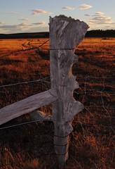 Working Together (Tones Corner) Tags: fence landscape post tekapo nzscene nzrural