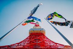 2014_05_02_TokyoTowerNoKoinobori2_006_Select_HD (Nigal Raymond) Tags: japan tokyo  tokyotower    koinobori  a7r cooljapan nigalraymond wwwnigalraymondcom metabones 20140502