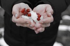 DSC_3355 (oleg281293) Tags: red snow hands warmth briar