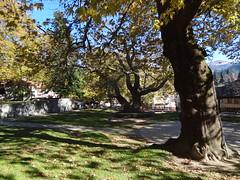 Metsovo Hellas DSC09313 (omirou56) Tags: metsovo hellas greece trees shadows green μετσοβο ελλαδα σκιεσ δεντρα πρασινο square πλατεια leaves sonydschx9v fabulousfoliage