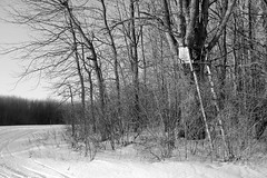 Hunter's lookout (#1421) (protophotogsl) Tags: winter blackandwhite bw snow ontario canada field rural landscape country hunting january trail perch ladder snowmobiletrail sv12 protophotogsl hunterslookout southstormont seaway12 img7633auto
