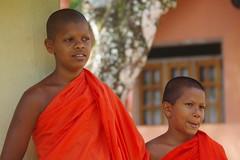 Moines souriants (novembre 2014) (Ostrevents) Tags: orange man smile rainforest young monk sri lanka teen srilanka ado sourire youngman safran homme saffron jeune jeunehomme moine chn toge forthumide sinhaja ostrevents