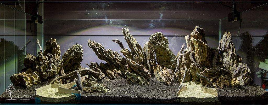 120x45x45cm Aquascape (Stu Worrall Photography) Tags: Wood Stone Aquarium  Ada Sand Dragon Nile