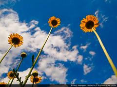 Sky. (kota-G) Tags: blue sky tokyo bluesky gr ricoh  gr3