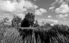 the land (Fearghl Nessbank) Tags: trees bw nature monochrome landscape blackwhite nikon theland d5100