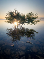 Life on the edge (Timothy Gilbert) Tags: sunset reflection tree water rocks cornwall wideangle panasonic submerged ultrawide hdr bodminmoor collifordlake gx7 olympus918mmf4056