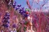 IMG_3061.jpg (edcool1_1) Tags: yotsuba yotsubato revoltech yotsubayosemite よつば よつばと よつば& リボルテック よつばとヨセミテ国立公園 よつばとヨセミテ よつば&ヨセミテ国立公園 よつば&ヨセミテ basslake