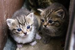 20160502_GorgeousKittens_0005_6x4 (Creativeleigh Shot...by LeighAnneD) Tags: cats cat feline outdoor kittens neighborhood litter felines