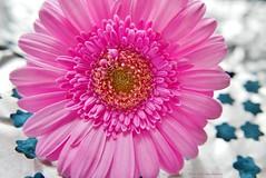 Pretty in Pink (pixelnic-uk) Tags: pink pinkflower petals prettyflower macro macroflowers macrophotography