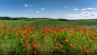 Clouds moving over the green fields, with poppies in the foreground