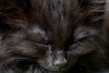 Slapende kitten (Marjan van de Pol) Tags: favorite canon kitten nederland fave dordrecht gayla 6d faved canon6d