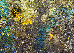 19.06.16 (Kirby_Wilson) Tags: abstract nature weathered lichen concret