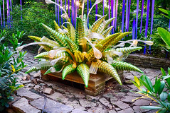 DSC05181-83_HDR (Capt Kodak) Tags: photomerge atlantabotanicalgarden dalechihuly glasssculpture chihulyinthegarden niksoftware hdrefexpro2 nikcollectionbygoogle everynowandthenyouneedalittleculture