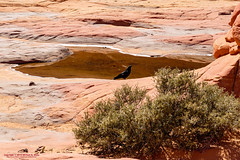 Around The Wave (mikerhicks) Tags: travel arizona usa southwest nature geotagged outdoors photography utah spring unitedstates desert hiking adventure event backpacking wilderness kanab thewave marblecanyon onemile coyotebuttesnorth vermilioncliffsnationalmonument geo:country=unitedstates camera:make=canon exif:make=canon geo:state=arizona exif:aperture=90 exif:focallength=35mm exif:lens=1835mm exif:isospeed=100 canoneos7dmkii camera:model=canoneos7dmarkii exif:model=canoneos7dmarkii sigma1835f18dchsma geo:lat=3699480833 geo:lon=11200586167 geo:lat=36994808333333 geo:lon=11200586166667 geo:location=onemile geo:city=marblecanyon