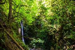 Oasis 2 (ian.kobylanski) Tags: trees plants canada texture nature leaves vancouver forest island waterfall rainforest rocks bc victoria goldstream jungle canopy dense