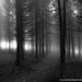 lugubre forêt