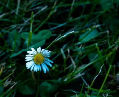 P1020189 (sebastiang2) Tags: plant flower europe royal poland polska panasonic baths warsaw warszawa kwiat azienki krlewskie fz72