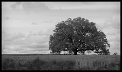 Big Dreams (Abandoned Illinois) Tags: white black tree monochrome field grass countryside horizon large dreaming and gazing vast