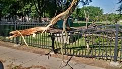 Tree Limb Down in Fuller Park #7 (artistmac) Tags: park street chicago tree fence illinois outdoor wroughtiron il repair fallen southside bent limb fuller fullerpark michaelbrown superintendent workorder blowndown hispark lethimactlikeitforachange