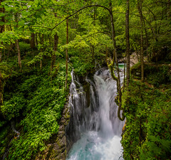 Slovenia / Slowenien: unikov vodni gaj (CBrug) Tags: park tree water landscape waterfall nationalpark wasser wasserfall outdoor pflanze bach slovenia national slowenien landschaft bltter baum triglav triglavnationalpark bovec gaj lepena heiter unikov unikovvodnigaj unikovgaj